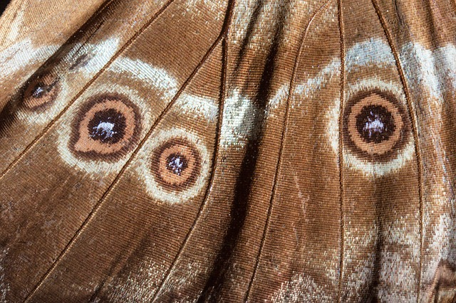 eyes-200327_640
